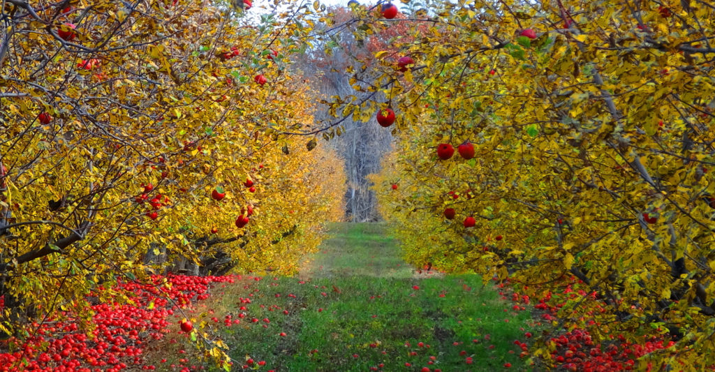 The cider route